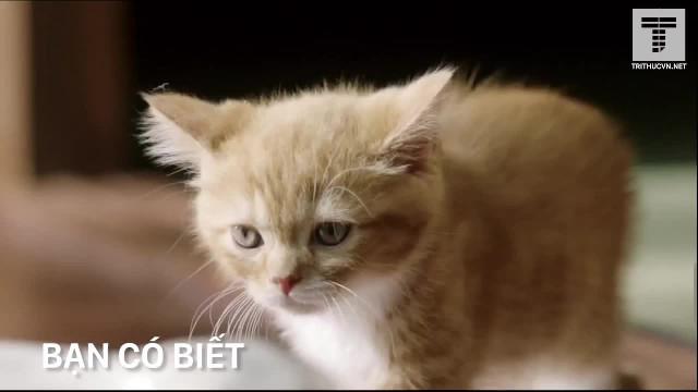 Người dân nước nào yêu mèo nhất?