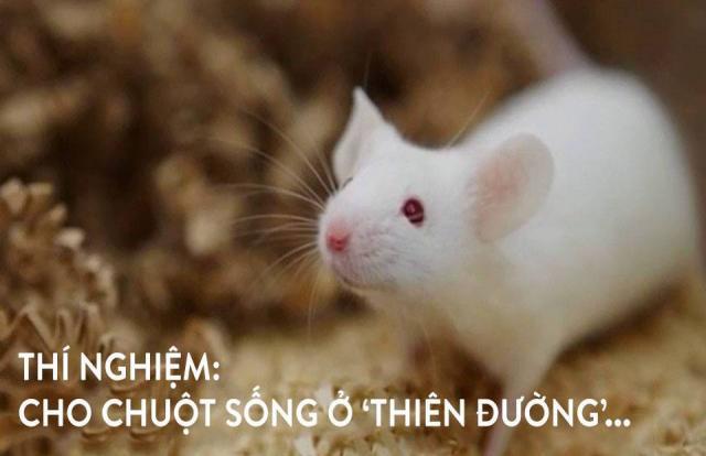 Thí nghiệm: Cho chuột sống ở 'thiên đường', kết quả lại là sự tuyệt diệt...