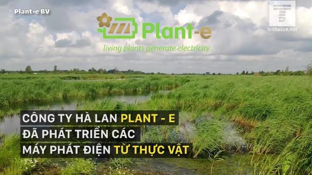 Phát minh giúp thu hoạch điện từ... cây trồng