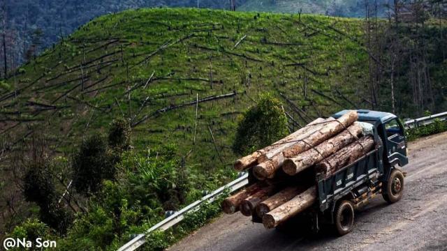 Khi những cánh rừng và dòng sông bị tận diệt...