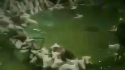 Trại lợn 4.000 con vùng vẫy trong nước lũ