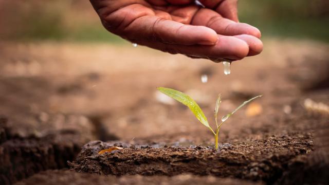 8 cách tiết kiệm nước đáng chú ý
