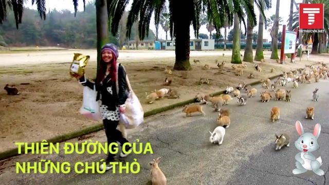 Đảo Thỏ Nhật Bản - thiên đường của những chú thỏ