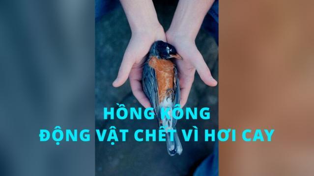 Hồng Kông: Nhiều động vật chết la liệt vì hơi cay