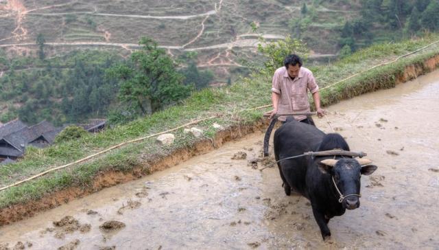 Trung Quốc: Khủng hoảng lương thực và nguy cơ từ bên trong