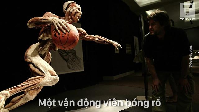 Bí ẩn đằng sau triển lãm cơ thể người tại Việt Nam!